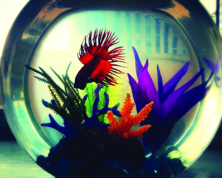 Sarah Wilson. Fish Bowl. Photography