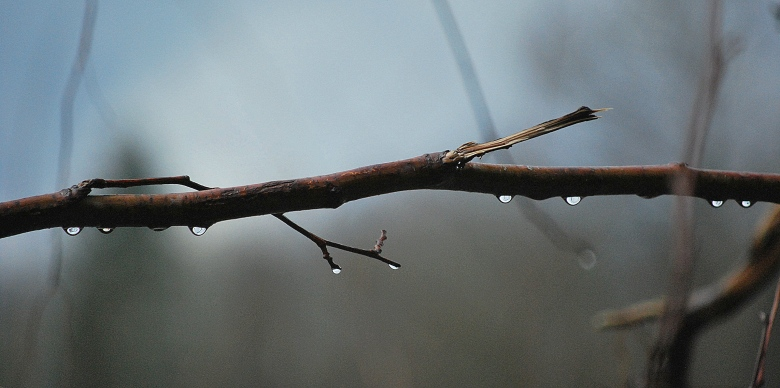 Rizan-Rain Branch